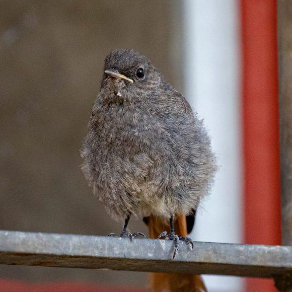 Die Welt der einheimischen Vögel